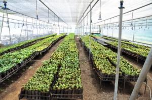 Seedlings being grown for restoration