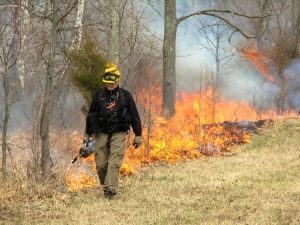 Experimental prescribed fire