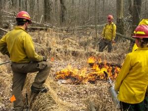 Experimental fires