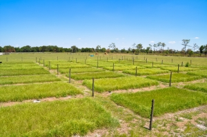 Experimental grazing plots at Ona, FL