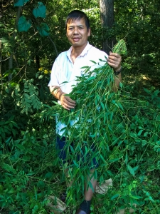 Furong Long (Yunnan, China) with experimental plants from common garden