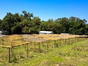 Invasion x drought common garden, Bivens Arm, FL